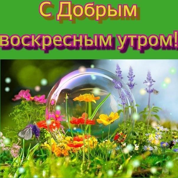 Пожелания с добрым воскресным утром в открытках009