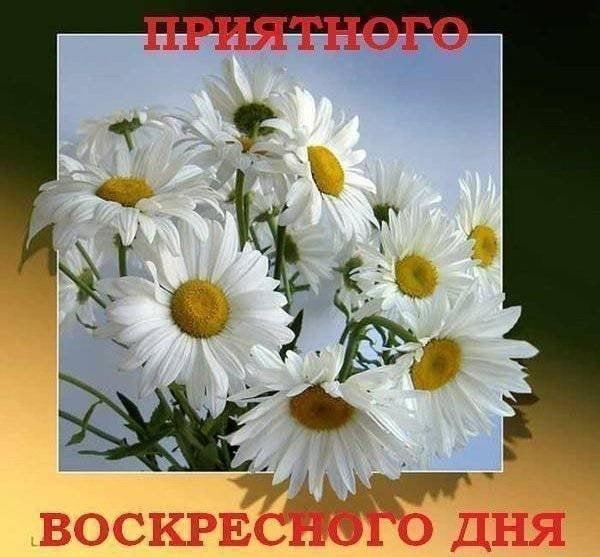 Пожелания с добрым воскресным утром в открытках017