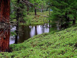 Полянка в лесу картинки и изображения 020