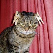 Приколы про вислоухих котов   фото 029