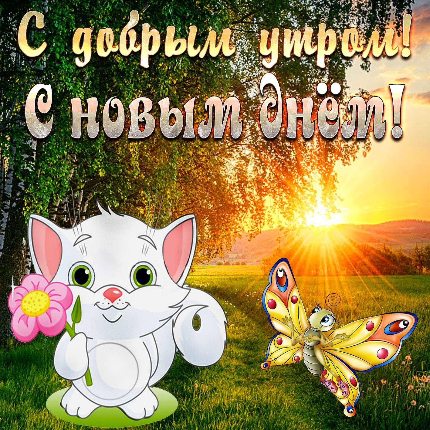 Поздравлением, свежие картинки с добрым утром и хорошего дня