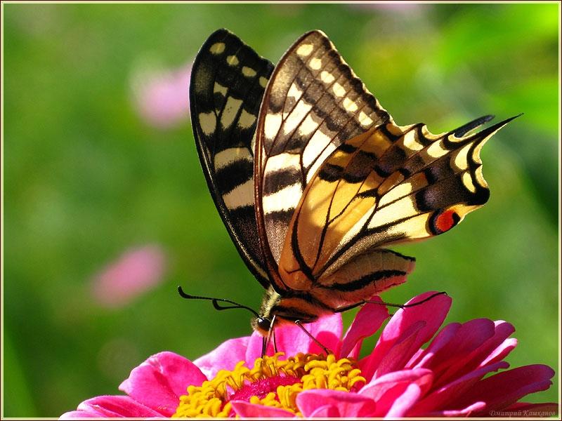 Прикольные картинки в руках бабочки 001