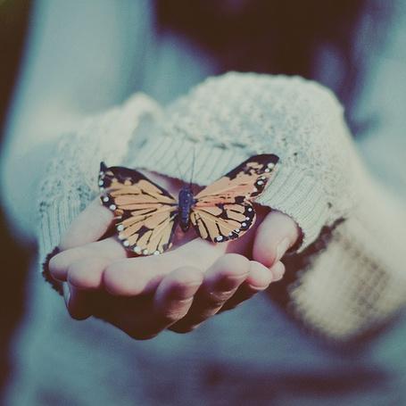 Прикольные картинки в руках бабочки 002