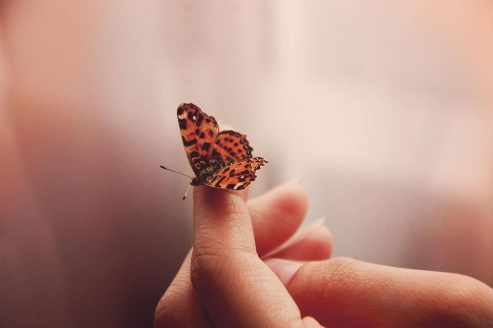 Прикольные картинки в руках бабочки 004