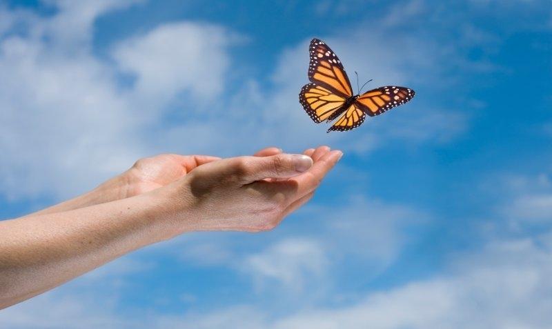 Прикольные картинки в руках бабочки 006
