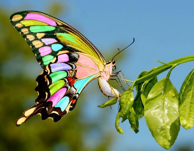 Прикольные картинки в руках бабочки 012