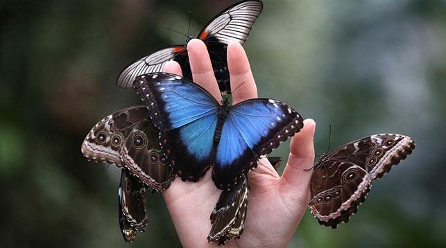 Прикольные картинки в руках бабочки 013