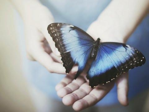 Прикольные картинки в руках бабочки 014