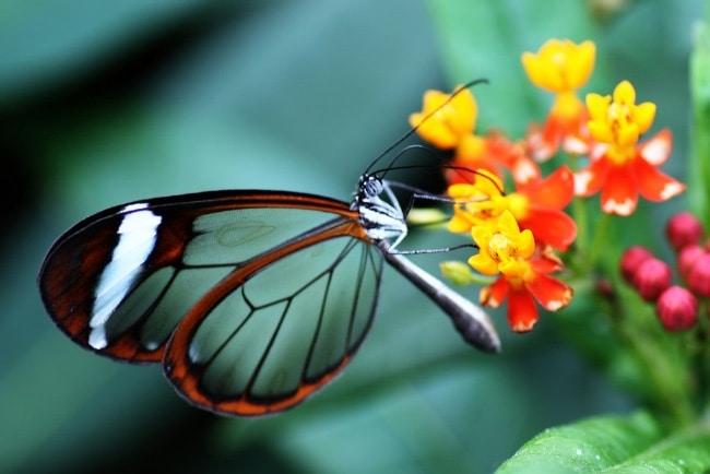 Прикольные картинки в руках бабочки 015