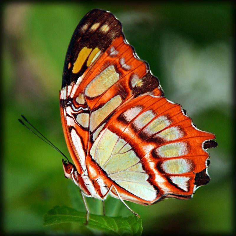 Прикольные картинки в руках бабочки 016