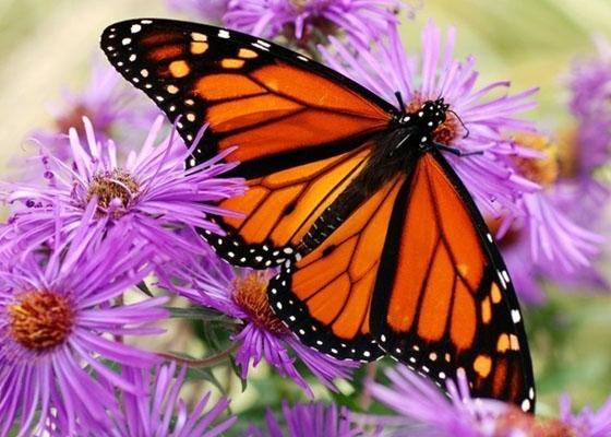 Прикольные картинки в руках бабочки 017