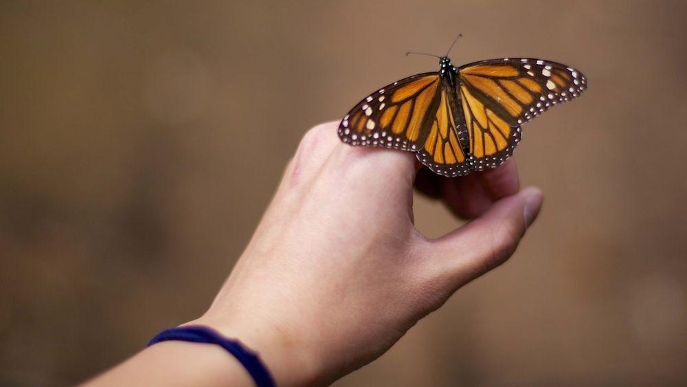Прикольные картинки в руках бабочки 018