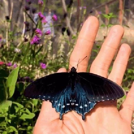 Прикольные картинки в руках бабочки 021