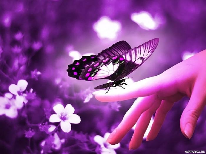 Прикольные картинки в руках бабочки 022