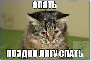 Прикольные картинки котов с надписями 029