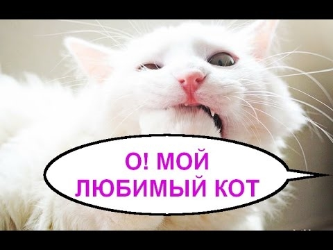 Открытки, ты мой котенок любимый картинки прикольные