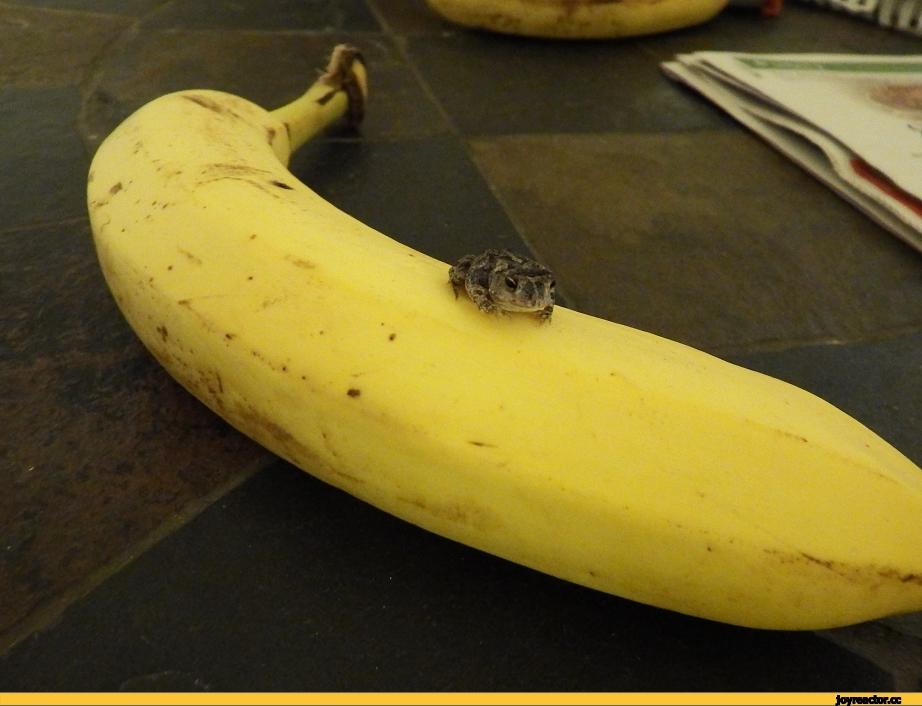 Картинки с бананами смешные
