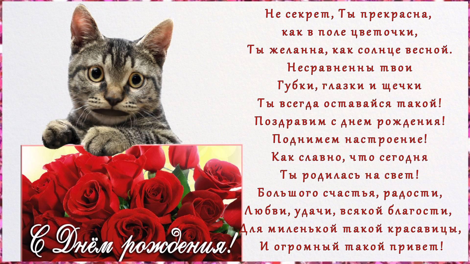 большинство стихи с днем рождения котенок картинки кричащие наряды жутких