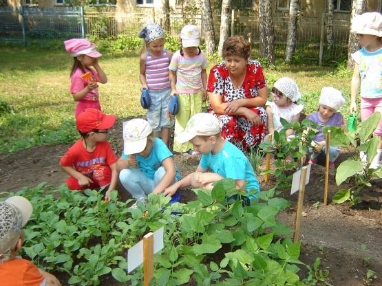 Природа летом картинки для детей детского сада (1)
