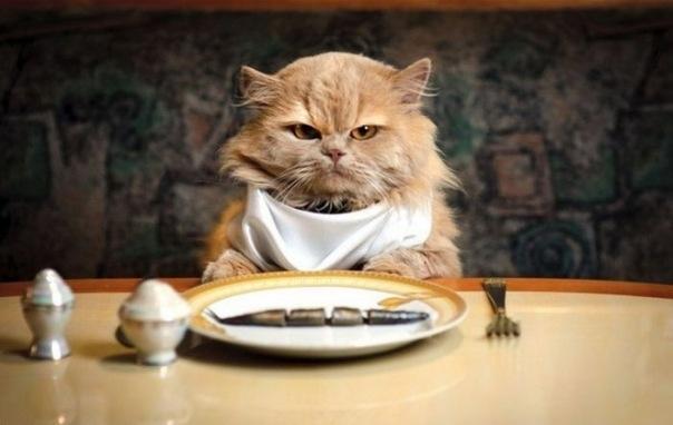 Приятного аппетита любимой девушке картинки 027