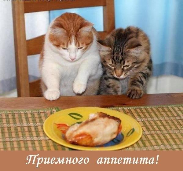 Приятного завтрака картинки прикольные   подборка002