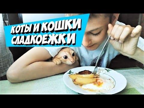 Приятного завтрака картинки прикольные   подборка016