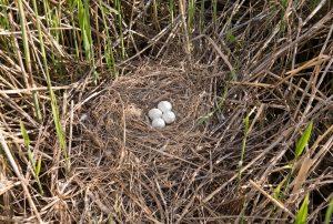 Птица в гнезде картинки   подборка 009