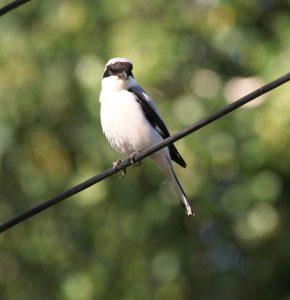 Птицы Курской области фото название и описание027