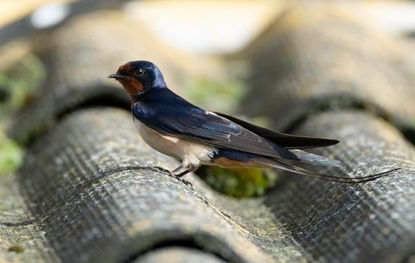 Птицы Татарстана   фото названия и описание (1)