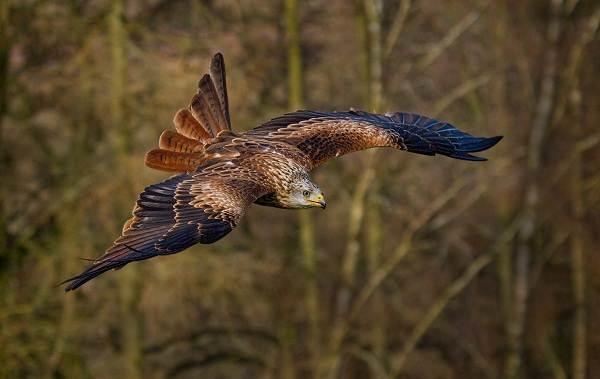 Птицы Татарстана   фото названия и описание (27)