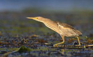 Птицы алтайского края картинки и названия птиц 028