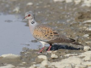 Птицы в Костромской области   фото с названиями (25)