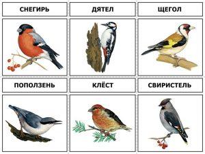 Птицы в лесу рисунок и картинки 023