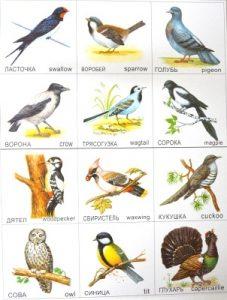 Птицы для детей фото и картинки 024