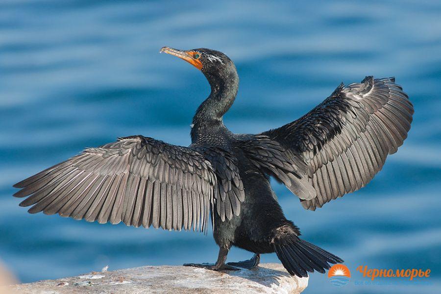 Птицы красноярского края   картинки и названия птиц (1)