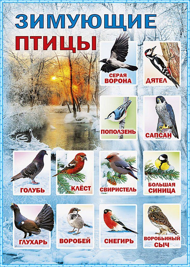 экрана, птицы россии в картинках с названием должен быть вашим