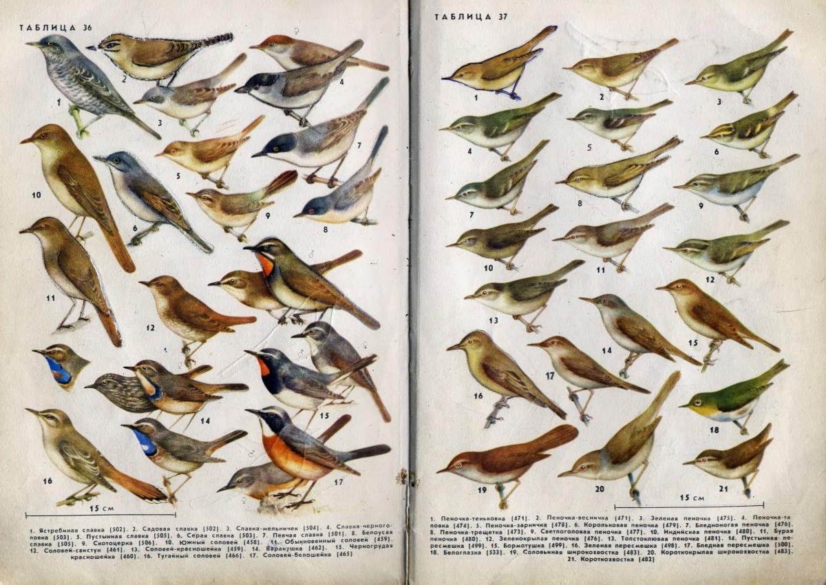 Определитель птиц по фото онлайн