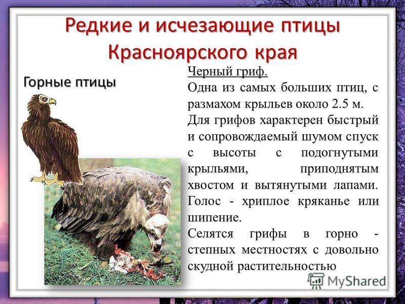 картинки животных красной книги красноярского края своеобразные