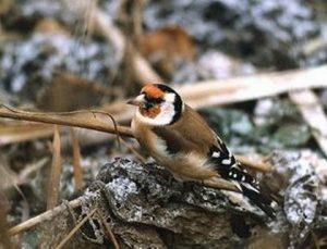 Птицы курганской области перелетные   картинки 028