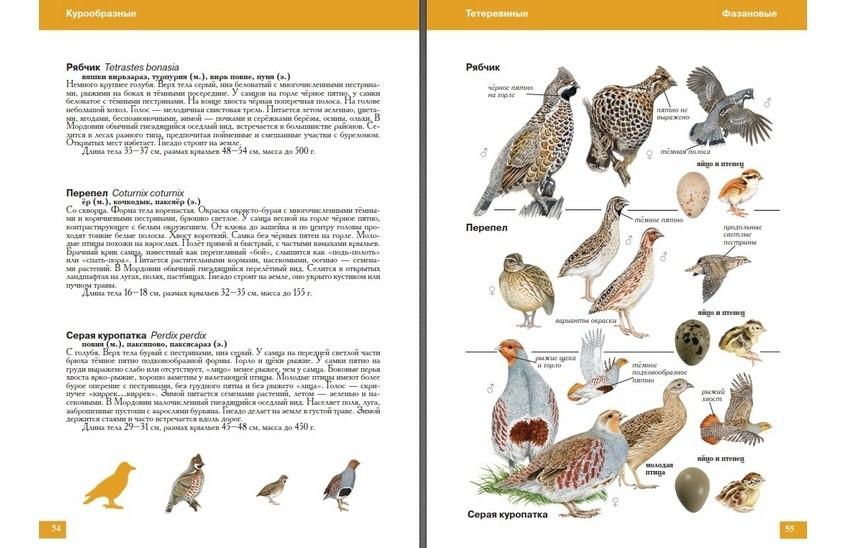 птицы мордовии фото с названиями постели это куда