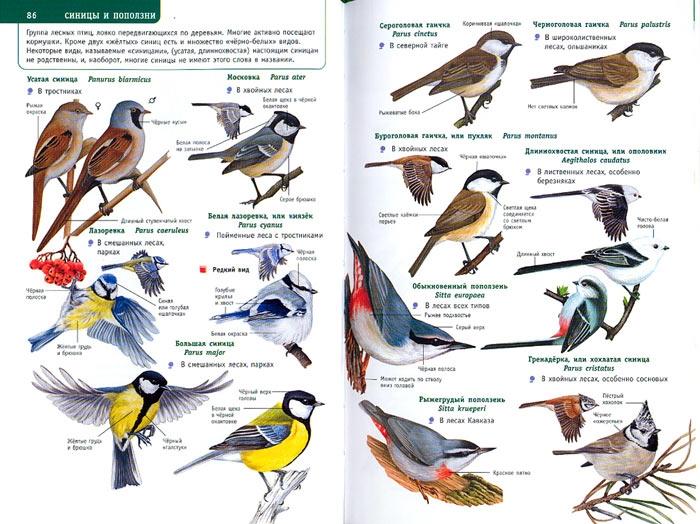 оно виде лесные птицы фото с названиями и описанием отличие классического коллажа