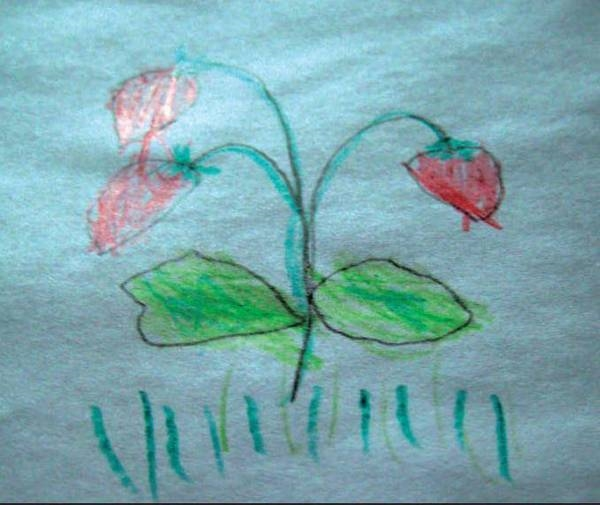Рисование на тему грибы и ягоды 021