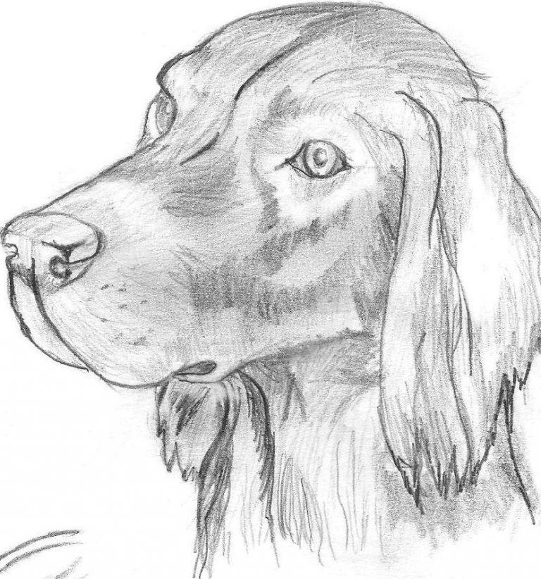 Поздравления, рисунки для срисовки легкие и красивые картинки животных карандашом