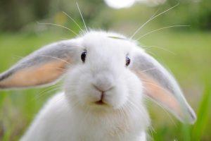 Рисунки кроликов для детей   подборка 018