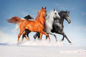Рисунки лошадей красивые картинки 017