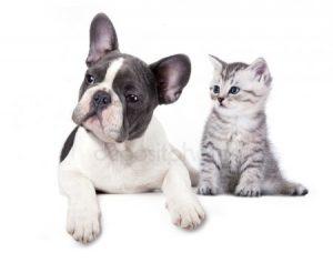 Рисунки пес и кот для детей 029