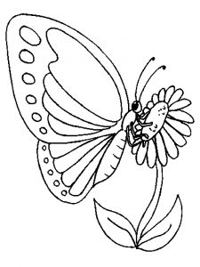 Рисунок бабочки для раскрашивания распечатать прямо сейчас 024