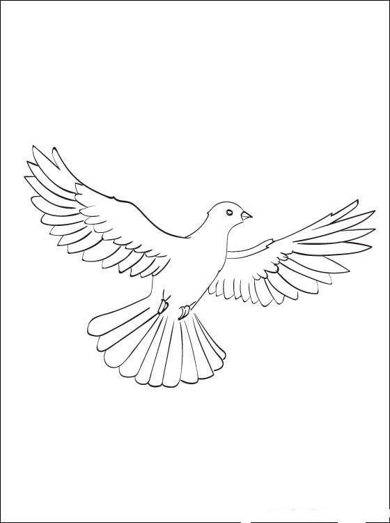Рисунок голубь мира для детей   картинки 029