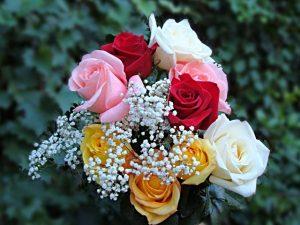 Розы для вас фото   удивительная подборка 020