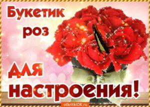 Розы фото для настроения 020